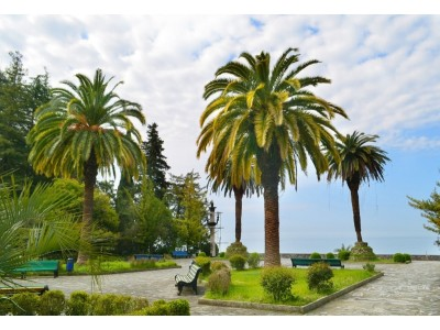 Территория | Парк-отель «Амра| Amra Park Hotel & SPA» | Абхазия, Гагра